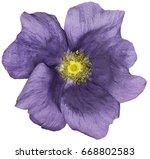 flower purple on a white... | Shutterstock . vector #668802583