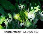 rain forest ferns   vegetation... | Shutterstock . vector #668929417