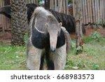 giant anteater | Shutterstock . vector #668983573