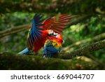 two beautiful parrots on tree... | Shutterstock . vector #669044707