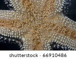 Close up shot of the underside of a starfish. - stock photo