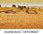 herd of cows're walking on... | Shutterstock . vector #669138667