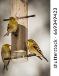 Small photo of American Goldfinch – Spinus Tristis Family On the Bird Feeder