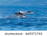 striped dolphins in the...   Shutterstock . vector #669371743