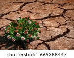 flowers on the cracked earth in ... | Shutterstock . vector #669388447
