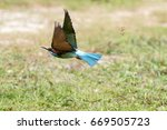 Small photo of a flying Blue-Throated Bee-Eater at Kg Sungai Labu, Labuan F.T Malaysia