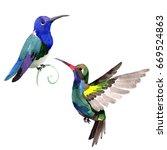 sky bird colibri in a wildlife... | Shutterstock . vector #669524863