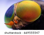 macro sharp and detailed fly... | Shutterstock . vector #669555547
