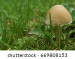 Small Mushroom Growing In The...