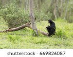 spider monkey.   Shutterstock . vector #669826087
