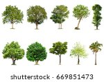 isolated tree on white... | Shutterstock . vector #669851473