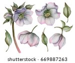Stock photo watercolor set of hellebore flowers hand drawn floral illustration isolated on white background 669887263