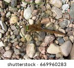 The Dragonfly Sitting On Small...
