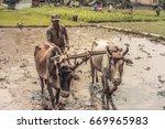 Rice Farmer Working Rice Field...