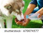 portrait of breed siberian... | Shutterstock . vector #670074577