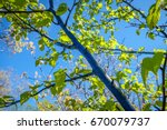 tree painted blue by graffiti... | Shutterstock . vector #670079737