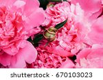 gold wedding rings on a... | Shutterstock . vector #670103023