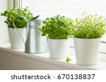 fresh basil and thyme herb in... | Shutterstock . vector #670138837