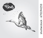 hand drawn stork sketch... | Shutterstock .eps vector #670194253