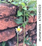 Small photo of Soft focus of flower grass in spring season with the stone brick wall background in nature,Grasses naturally occur naturally and summer season.
