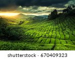 tea plantation at the cameron... | Shutterstock . vector #670409323