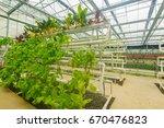 modern agriculture of vegetable ... | Shutterstock . vector #670476823