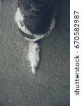 dog tail | Shutterstock . vector #670582987