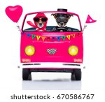 Couple Of Two Dogs Driving  A ...