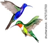 sky bird colibri in a wildlife... | Shutterstock . vector #670710703