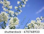 Small photo of white flower blooming in brighter day, blossom with sky background, flower and leaf