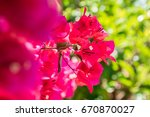 close up of a red flower with... | Shutterstock . vector #670870027