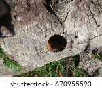 Small photo of Wood with a woodpecker hole