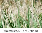 view from the dragoman marsh in ... | Shutterstock . vector #671078443