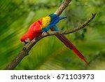 red parrot scarlet macaw  ara... | Shutterstock . vector #671103973