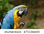 tropical blue yellow exotic... | Shutterstock . vector #671136643