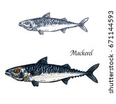 mackerel fish vector sketch... | Shutterstock .eps vector #671144593