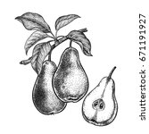 pears. realistic vector... | Shutterstock .eps vector #671191927