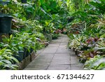 garden path way with under tree ... | Shutterstock . vector #671344627