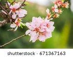 honey bee harvesting pollen... | Shutterstock . vector #671367163