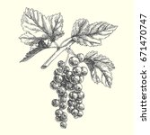 currant sketch isolated on... | Shutterstock .eps vector #671470747