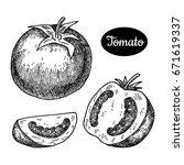 fresh tomato. hand drawn sketch ... | Shutterstock .eps vector #671619337