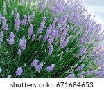 flowerbeds | Shutterstock . vector #671684653
