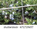 Dragonflies Perched On A Wire...