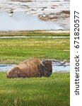 Small photo of American bison (Bison bison) in front of a steaming geyser in Yellowstone National Park, Wyoming, USA