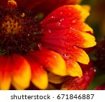 colorful flower with water... | Shutterstock . vector #671846887
