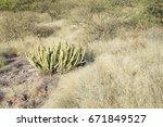 Landscape At Desert Park With...