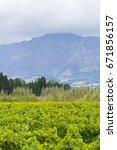 grape wineyard in paarl  south... | Shutterstock . vector #671856157