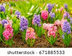 close up of surprise pink and... | Shutterstock . vector #671885533