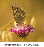 Small photo of butterfly sting color background