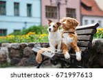 two adorable dogs posing on a... | Shutterstock . vector #671997613
